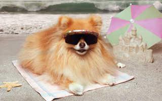 Собака на дачном участке