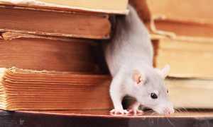 Избавится от крыс и мышей