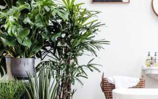 Интерьер цветов в квартире