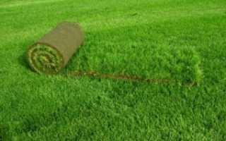 Укладка газона рулонного