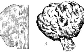 Отклонения и пороки древесины и пиломатериалов