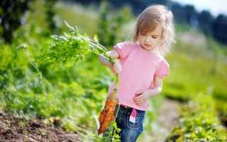 Растения для детской площадке