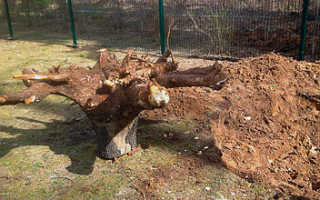 Эффективная корчевка деревьев