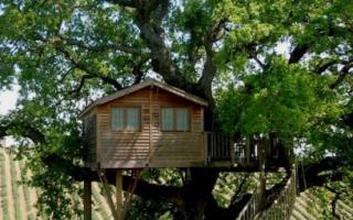 Домик на дереве – как построить и что для этого нужно?